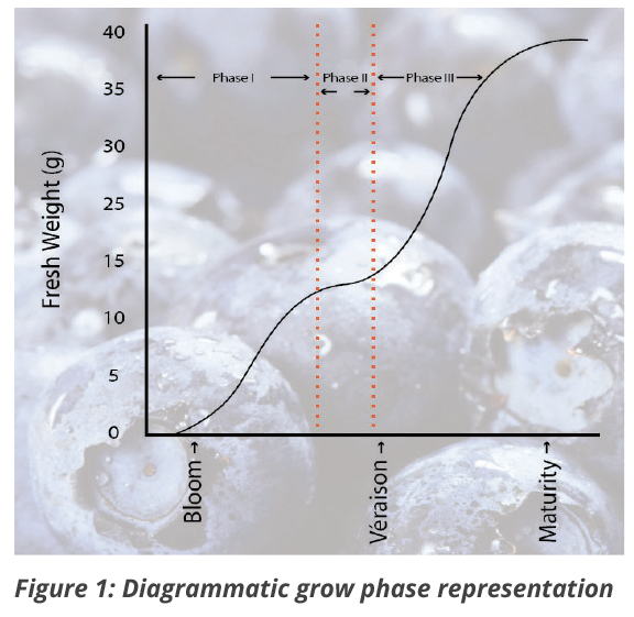 Diagrammatic grow phase representation